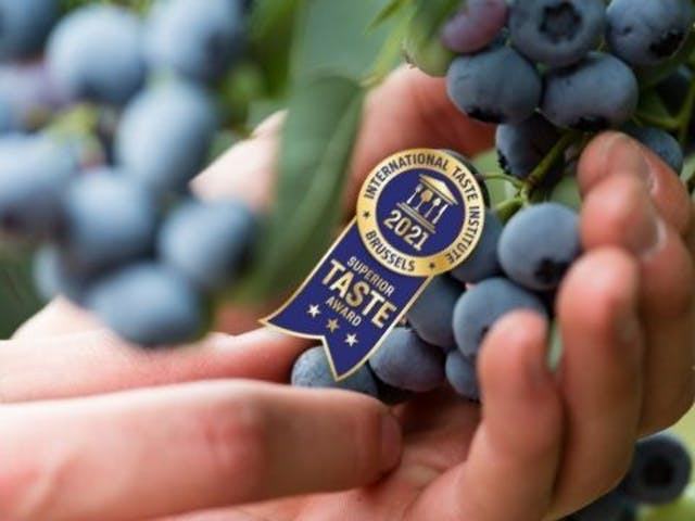 Blueberry pick