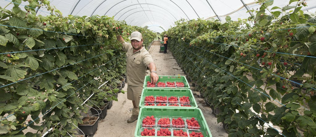 Stanthorpe20raspberries hr mtime20181214105227
