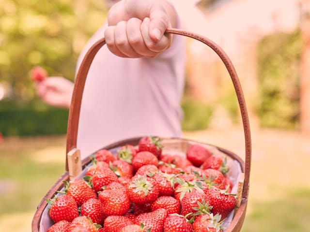 What to do with 1kg of strawberries?
